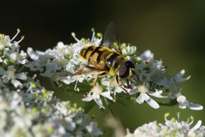 insectes2477