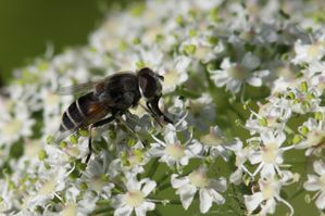 insectes2485