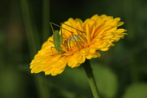 insectes 9521