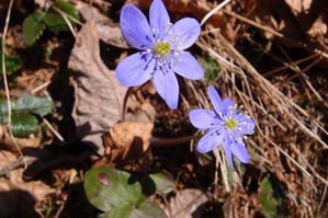 2012-03-26 Source Arveyron 07