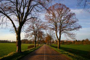 route bordee d'arbre2