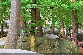 280x186xthumb_foret-fontainebleau-barbizon-01_jpg_pagespeed.jpg