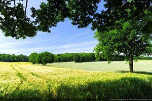 normal Un paysage de campagne