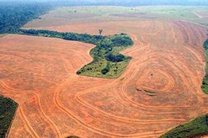 amazon_deforestation.jpg