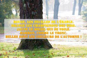 belles-couleurs-automne.jpg
