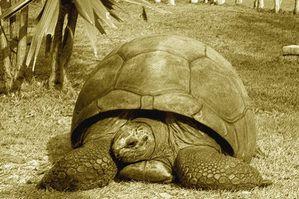 tortue-geante-487028
