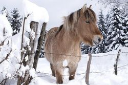 cheval-grand-froid-animal-cross.jpg