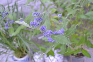kew-blue.JPG