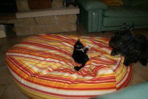 20091211-Moka&Figaro2