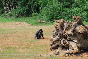 1ere sortie ile bonobo-23042011 044