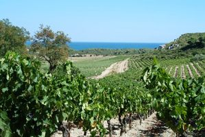 Vignes_du_bord_de_mer__photo_GN.JPG