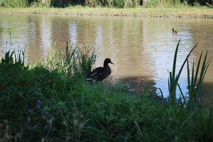 sortie-canal 0289