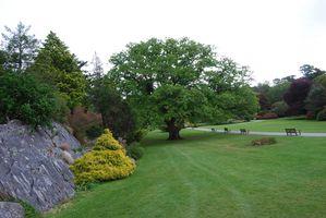 Muckross House - Irlande - mai 2011 005