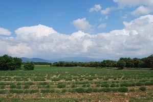 Randos-2011-0226.JPG