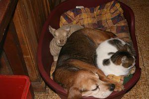 sanctuaire pour animaux de ferme domaine de douages (2)