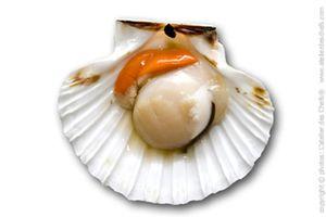 ingredient-d916-la-coquille-saint-jacques.jpg