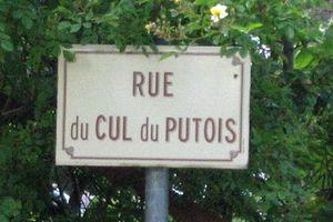 putois-667171