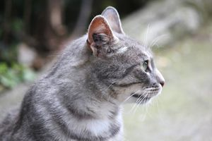 2012_0614chats-Louise-Michel0087.JPG