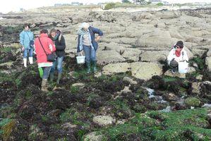 Algues-cueillettes-P1100567-Ploemeur-09-10-2010.JPG