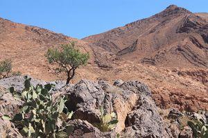 maroc-2013 8491 (2)