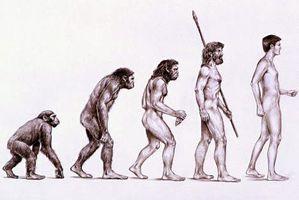 evolution-de-l-homme1.jpg