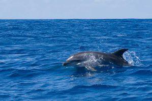 duree rencontre avec dauphins marineland