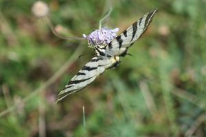 butterfly-copie-1.JPG