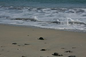 March-09---At-the-beach--Britanny--50-.jpg