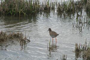 les-oiseaux-au-bord-de-l-eau 5945
