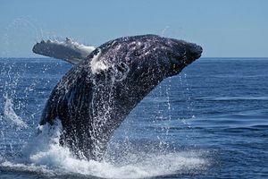 animal baleine-1533851bf7