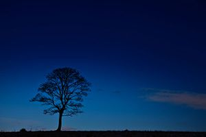tree-silhouette-at-night-11296573307PBy.jpg