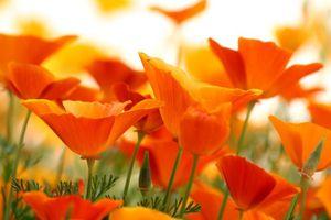plaine-orange-568601.jpg