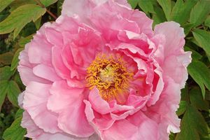 rose-393042.jpg