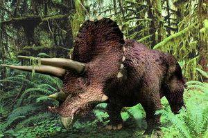 triceratops-563843.jpg