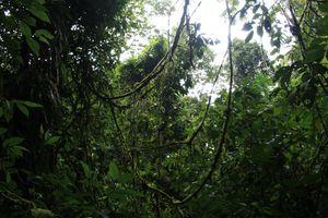 Costa-Rica 2564