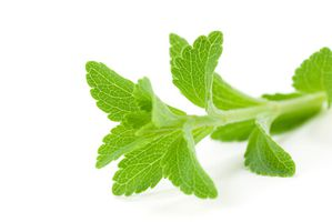 Stevia Plante-copie-1