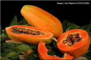 papaya-lg-for-blog-of-Feb-16--2012.jpg
