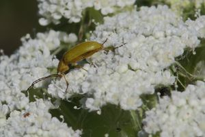 insectes2472
