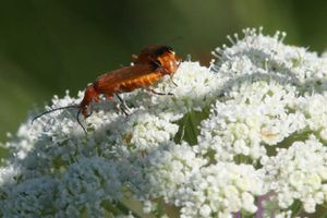insectes2530 1