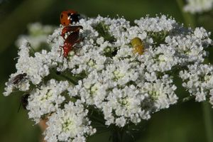 insectes2536 1