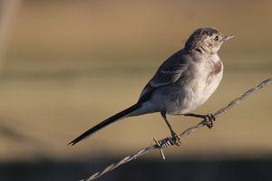 oiseaux2721