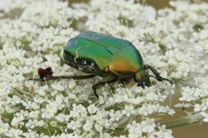insectes 9437