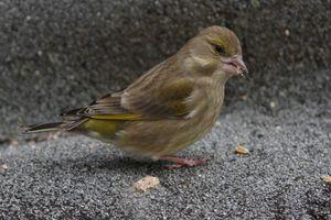 oiseaux3756