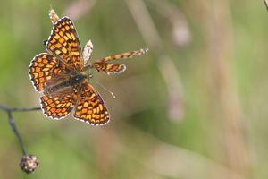 papillons4388