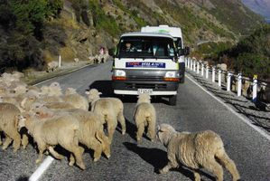 route to queenstown (4)