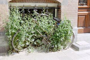 2002-05-17-au-20-Amsterdam--14.JPG