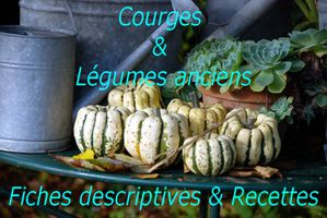 Vignette courges T