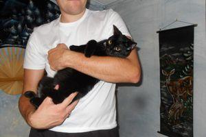 chat-noir3