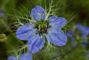FA-Fleur-bleue-Cheminee-tournante.jpg