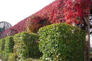 Pergolas automne